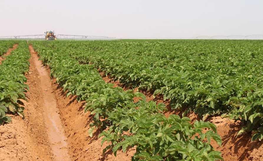 الزراعة: تراجع مساحة الأراضي المزروعة في المملكة