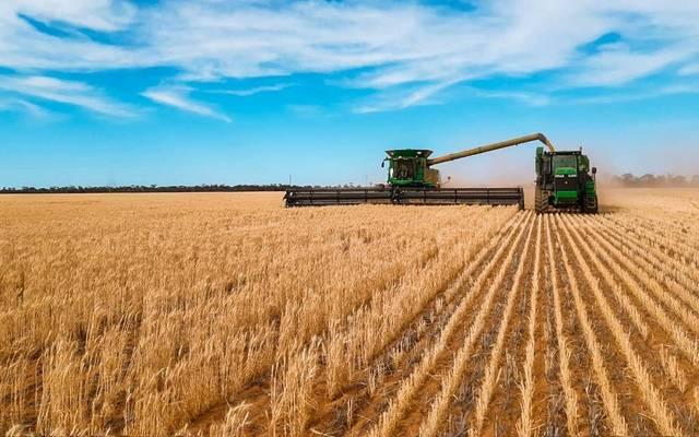 الحبوب السعودية تصرف دفعة جديدة من مستحقات مزارعي القمح المحلي