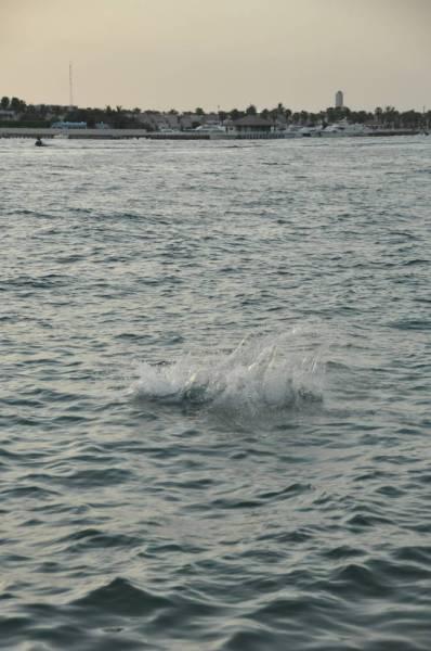 شاطئ السباحة الوحيد مغلق بأمر «موسم جدة»