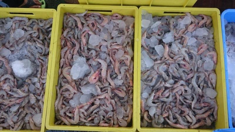 بدء تخزين الروبيان تزامناً مع انتهاء موسم الصيد
