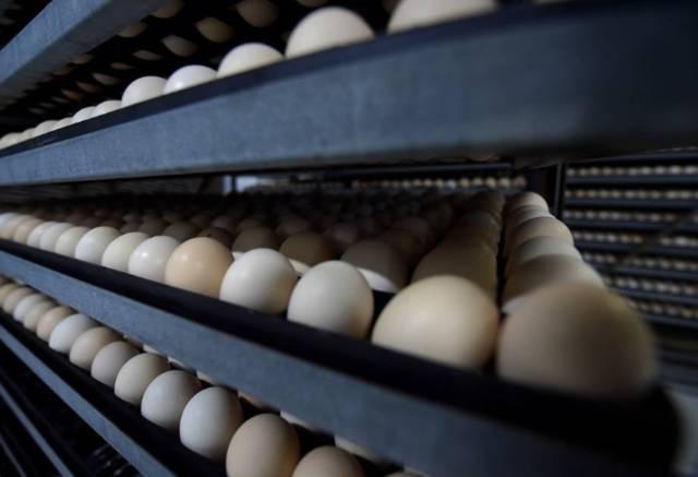 الزراعة السعودية: استيراد كميات إضافية من البيض خلال أيام