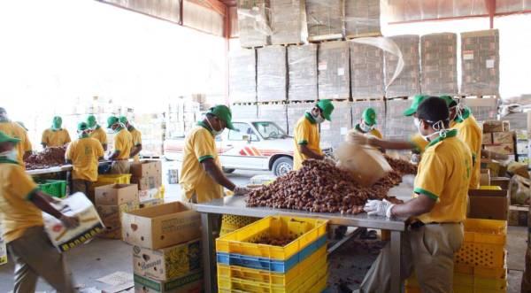 Saudi Arabia exports dates of 574 million to 60 countries