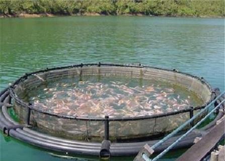 وزارة الزراعة تلوّح بسحب تراخيص بعض المزارع السمكية المخالفة